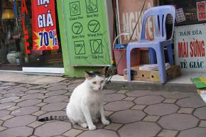 "Christian Science Monitor: ""Why do Vietnamese keep cats on a leash?"""