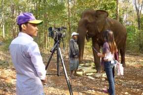 "The Globe and Mail: ""Cambodia's famous elephant shines light on protecting aging animals"""