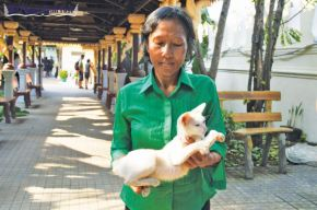 "Phnom Penh Post: ""History of cats in Cambodia is a long story even though it's only a short tail"""